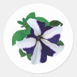 One Purple and White Petunia Sticker