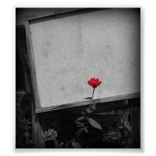 One Red Flower Poster