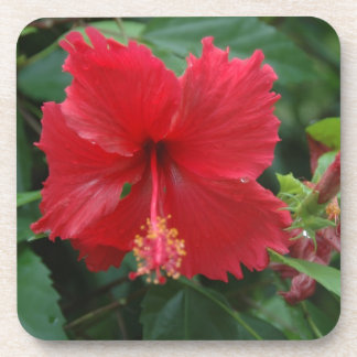 One red hibiscus drink coasters