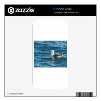 One seagull floating on the sea surface skins for iPhone 4