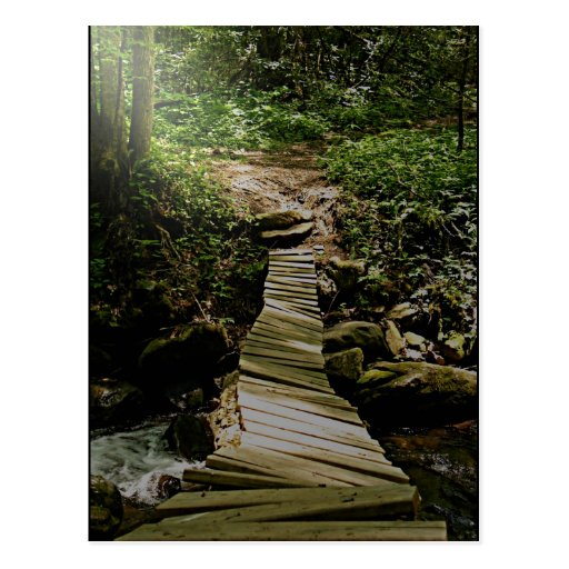 One Step at a Time Forest Wooden Bridge Photo Post Cards