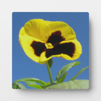 One Sun Pansy Plaque