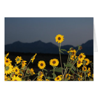 One Sunflower above the Others Card