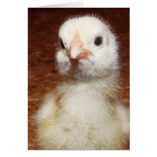 One Unhappy Little Chicken Card