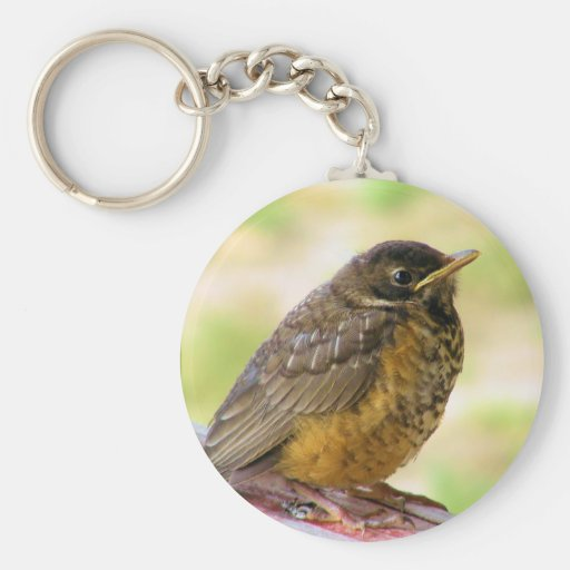 One Week Old Robin On a Perch Key Chains