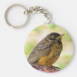 One Week Old Robin On a Perch Basic Round Button Keychain