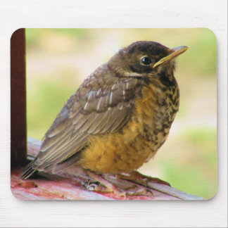 One Week Old Robin On a Perch Mouse Pad