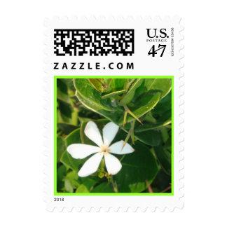 One white flower stamp