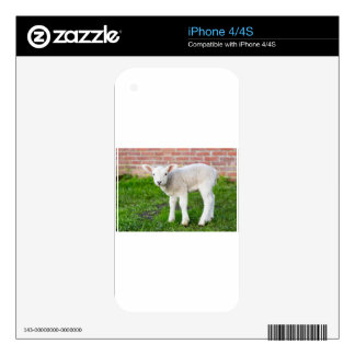 One white newborn lamb standing in green grass decal for the iPhone 4S