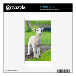 One white newborn lamb standing in green grass decals for the iPhone 4S