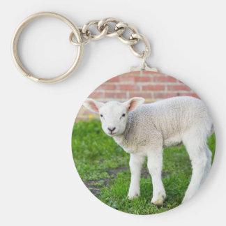 One white newborn lamb standing in green grass keychain