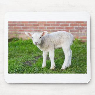 One white newborn lamb standing in green grass mouse pad