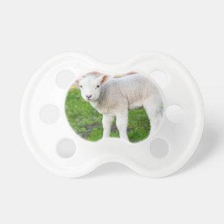 One white newborn lamb standing in green grass pacifier
