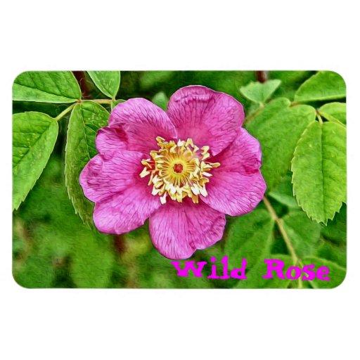 One Wild Rose Rectangular Magnets