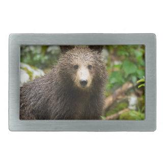 One year old Brown Bear in Slovenia Rectangular Belt Buckle