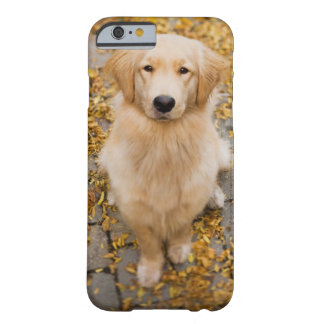 One year old Golden Retriever, portrait Barely There iPhone 6 Case