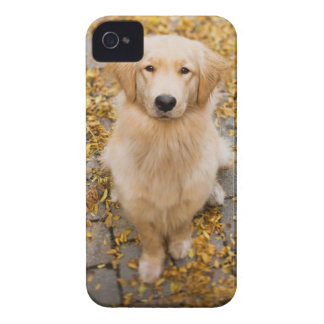 One year old Golden Retriever, portrait Case-Mate iPhone 4 Case