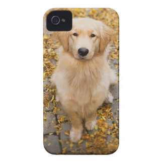 One year old Golden Retriever, portrait iPhone 4 Cases