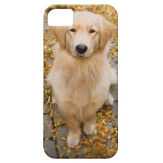 One year old Golden Retriever, portrait iPhone 5 Cases