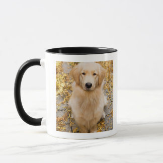 One year old Golden Retriever, portrait Mug