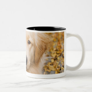 One year old Golden Retriever, portrait Two-Tone Coffee Mug