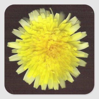One Yellow Wild Flower Square Sticker