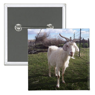 One Young Goat Pinback Button