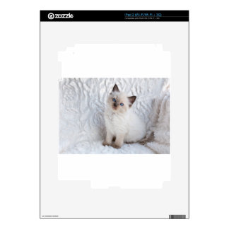 One young ragdoll cat sitting on fur in chair decal for iPad 2