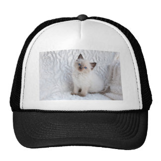 One young ragdoll cat sitting on fur in chair trucker hat