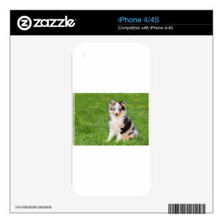 One young sheltie dog sitting on grass decals for the iPhone 4S