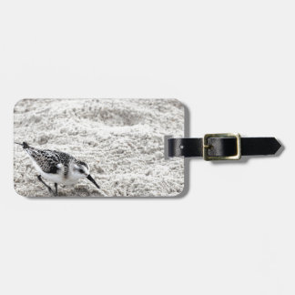 One Young Snowy Plover Bird Luggage Tag