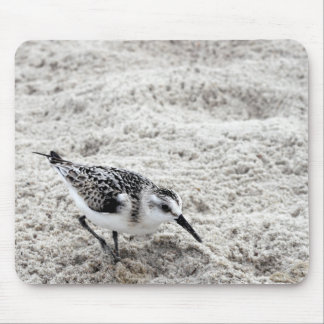 One Young Snowy Plover Bird Mouse Pad
