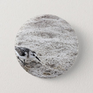One Young Snowy Plover Bird Pinback Button