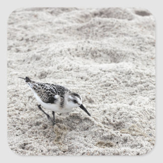 One Young Snowy Plover Bird Square Sticker