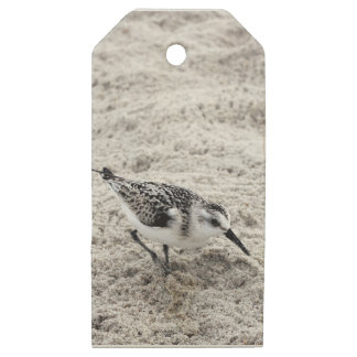 One Young Snowy Plover Bird Wooden Gift Tags