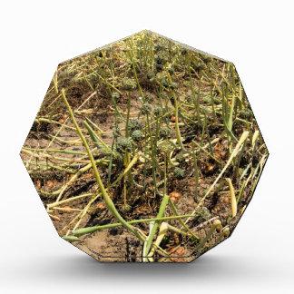 Onion Field Landscape Acrylic Award