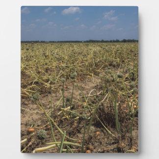 Onion Field Landscape in Georgia Plaque