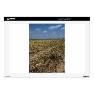 Onion Field Landscape in Georgia Skin For Laptop