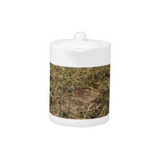 Onion Field Landscape in Georgia Teapot