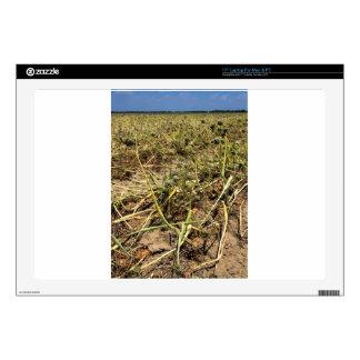 Onion Field Landscape Skin For Laptop