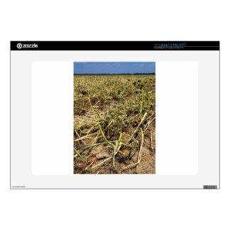 Onion Field Landscape Skins For Laptops