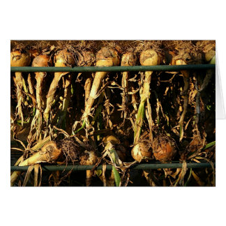 Onions drying in the late afternoon sun card