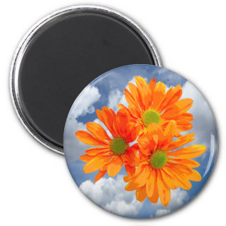 Only 3 Gerbera Daisy Blossoms + your text & ideas 2 Inch Round Magnet