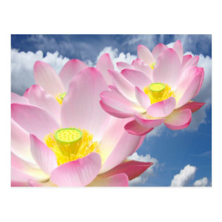 Only a Lotus Blossom + your text & ideas Postcard