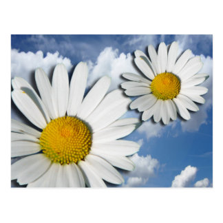 Only a Marguerite Blossom + your text & ideas Postcard