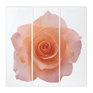 Only a Rose Blossom + your backgr. & ideas Triptych