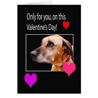 Only For You On Valentine s Rhodesian Ridgeback Greeting Card