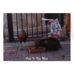 """""""Only In Key West"""" Cat & Rooster Photo Card"""