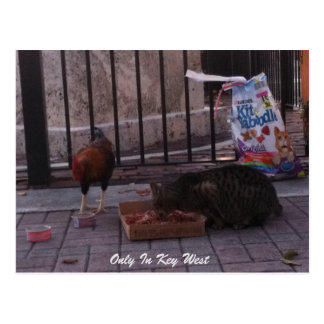 """Only In Key West"" cat & Rooster Postcard"