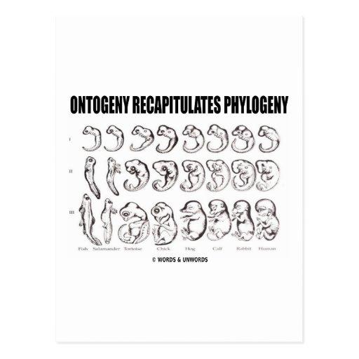 Ontogeny Recapitulates Phylogeny (Biology) Postcard